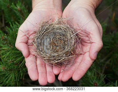 A Bird Nest On Top Of Two Hands