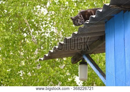 Dark Gray Cat Hunting A Bird From The Roof With Streetlight Of The House