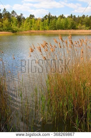 Spruce Forest On The Edge Of Macha Lake, Blue Sky With Clouds, Still Life By The Water, Czech Republ