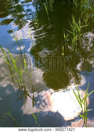 Reflections Of Clouds And Trees On The Calm Surface Of The Lake, Water Grass
