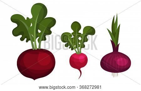 Mature Vegetables With Beet And Onion Bulb Vector Set