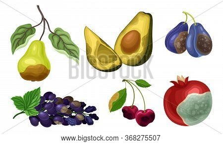 Garden Fruits With Skin Covered With Stinky Rot Vector Set