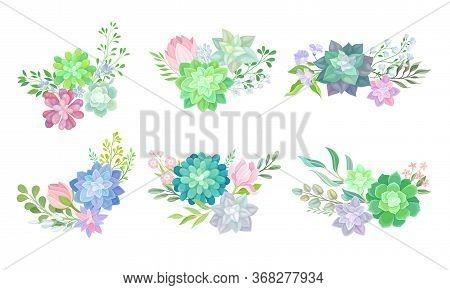 Floral Arrangements With Succulent Echeveria And Branches Vector Set
