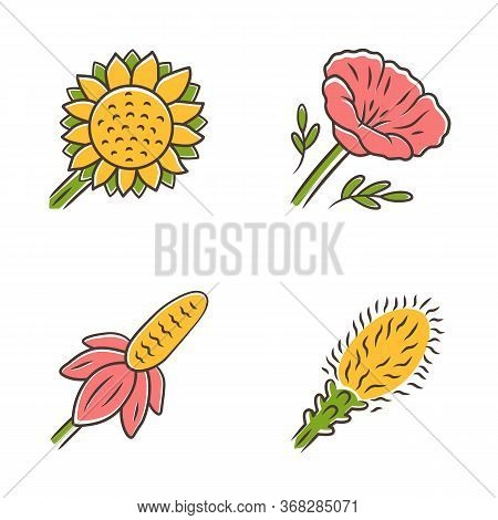 Wild Flowers Color Icons Set. Helianthus, California Poppy, Mexican Hat, Liatris. Blooming Wildflowe