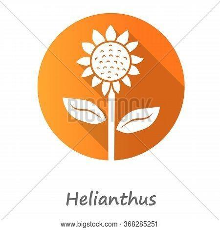 Helianthus Orange Flat Design Long Shadow Glyph Icon. Sunflower Head With Name Inscription. Field Bl