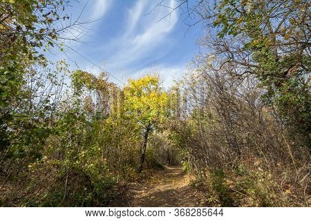 Forest Path, Surrounded By Broad Leaved Trees In Their Yellow Fall Autumn Colors, In The Fruska Gora