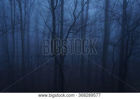 Blue Foggy Haze Settling On A Dark Forrest