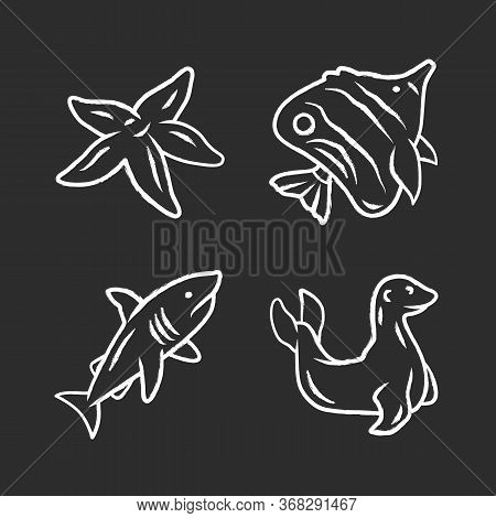 Sea Animals Chalk Icons Set. Starfish, Butterflyfish, Shark, Seal. Ocean Underwater Wildlife. Aquati