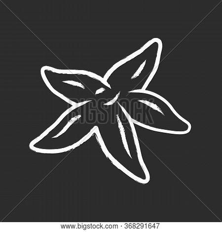 Starfish Chalk Icon. Tropical Underwater Creature. Invertebrate Mollusk. Star Shaped Aquarium Organi