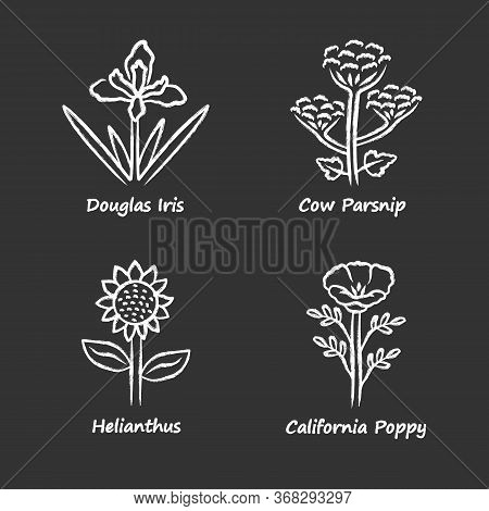 Wild Flowers Chalk Icons Set. Douglas Iris, Cow Parsnip, Helianthus, California Poppy. Blooming Wild