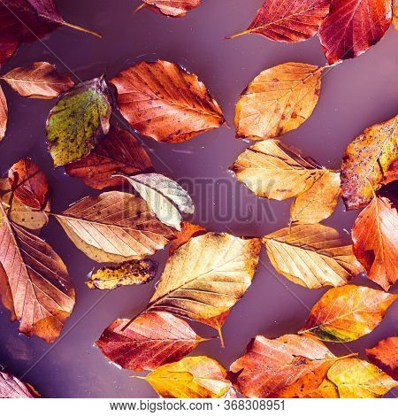 Red And Orange Autumn Leaves Floating In Purple Water, Abstract Surreal Natural Autumn Background