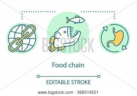 Food Chain Concept Icon. Order Of Predation. Food Web. Keystone Species. Global Ecosystem. Trophic L