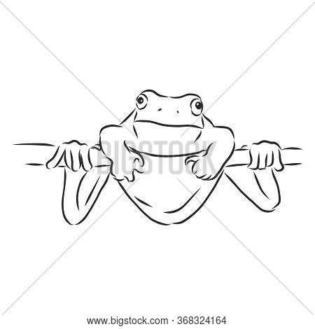 Outline Drawing Of A Frog Isolated On White, Frog Vector Sketch Illustration