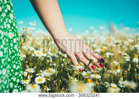 Woman's Hand Caressing Daisies On The Field