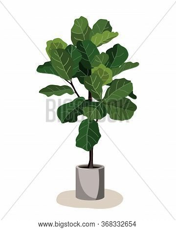Beautiful Fiddle Leaf Tree In Ceramic Pot On White Background. Ficus Lyrata Vector Illustration. Sty