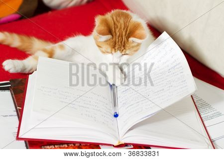 Small Cat Is Learning