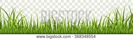 Grass Border. Horizontal Panorama Of Natural Lawn Or Meadow In Garden, Isolated Vector Eco Green Spr