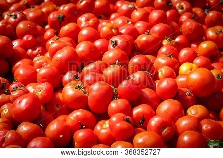 Tomato Background . Raw Tomatoes , Closeup Tomato Background  Raw Tomatoes Closeup