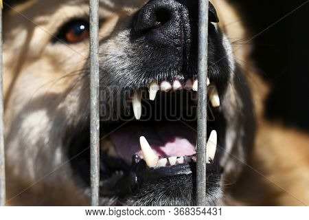 A Terrible Grin Of A Dog Sitting Behind Bars.