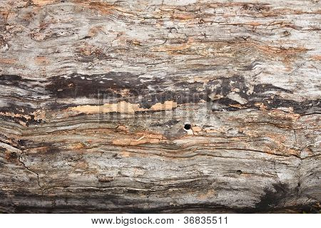 Old Dried Weathered Logs