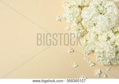 Beautiful Hydrangea Flowers On Beige Background. Spring Plant