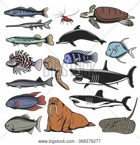 Sea Animal, Fish And Turtle Isolated Cartoon Characters. Vector Sea Turtle, Ocean Sharks And Dolphin