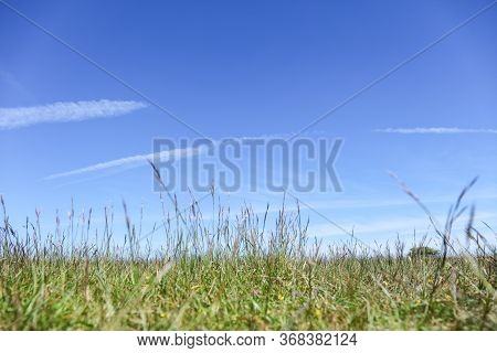 Green Field, Close Up, Differential Focus. Background