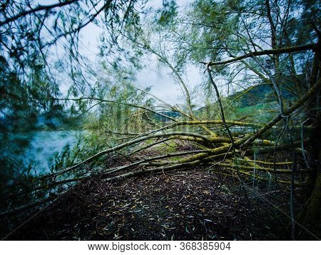 Fallen Trees In Pantano Lake, In Southern Italy.