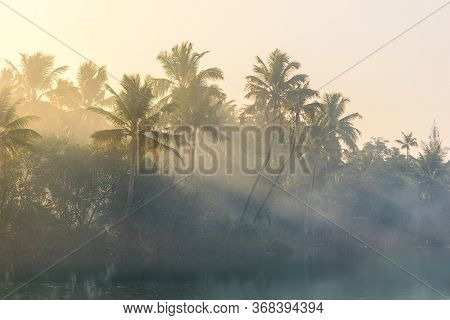 Jungle Of Palm Trees With Atmospheric Haze At Sunset, Along A Freswater Lake In Eramalloor\'s Backwa