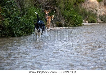 Dogs Running Free And Posing In A River