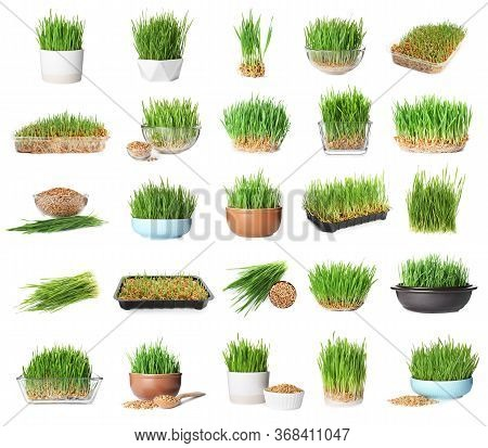 Set With Fresh Wheat Grass On White Background