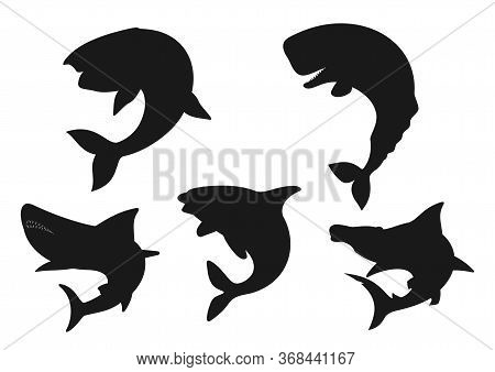 Whale, Shark And Orca Black Silhouettes Of Sea Animals. Vector Blue, Killer And Sperm Whales, Hammer
