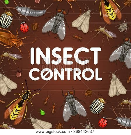 Pest Control And Insect Disinsection. Mosquito, Cockroach, Ant And Spider, Bedbug, Fly, Tick And Gra