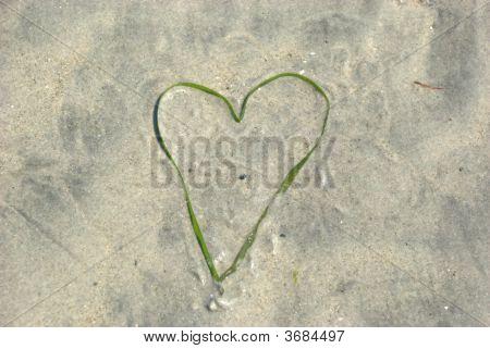 Seaweed Heart