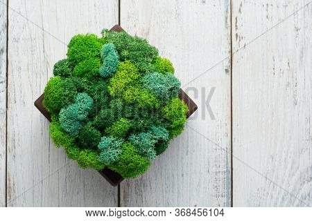 Generic Concept Image Of Decorative Moss. Used For Interior Design, Organic Fresh Living Or Office S