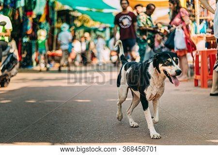 Anjuna, Goa, India. Dog Walking Across The Anjuna Market