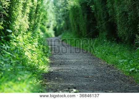 Alone Path In Forest