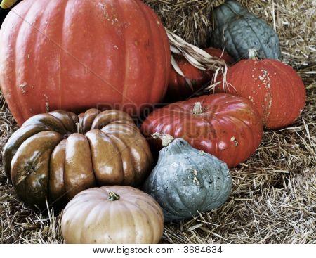 Closeup 0 F Eight Pumpkins