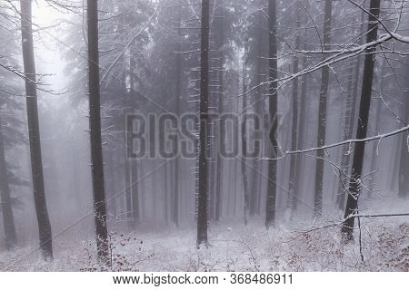 Beautiful Winter Deciduous Forest Immersed In White Darkness By The Sun, Which Is Trying To Push Thr