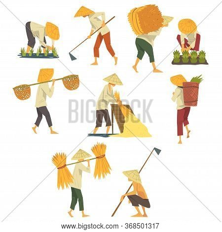 Asian Farmers In Straw Conical Hats Working On Field, Peasants Characters Planting And Harvesting Ri