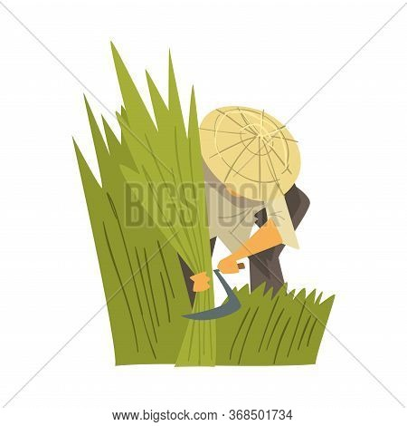 Asian Farmer In Straw Conical Hat Harvesting Rice, Peasants Character Working On Field Cartoon Style