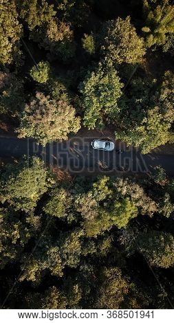Indore, India - May 21,\\\'2020: Drone shot of people in between trees wandering around the countryside.