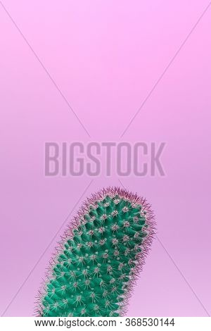 Surreal Green Cactus On A Purple Background