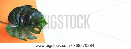 Banner With A Monstera Leaf On An Orange And White Background. Natural Background. Empty Space For Y