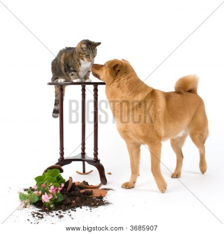 Cat and dog breaking things after a chase poster