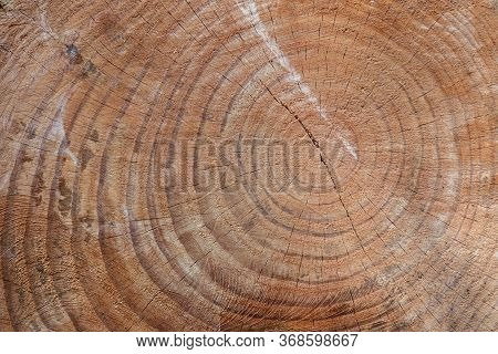 The Texture Of The Cut Trunk Of An Old Tree With Rings. Cross-section Of The Old Tree