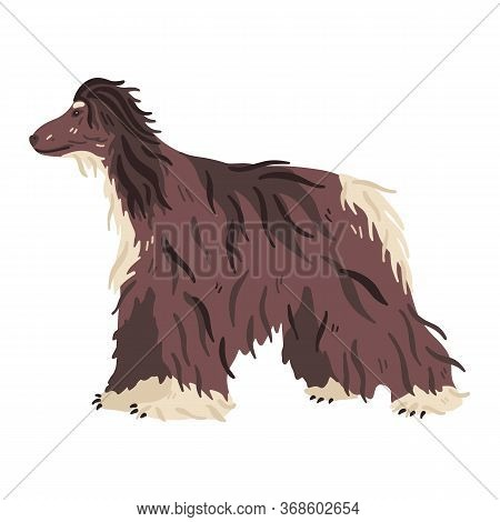 Afghan Hound Hunting Breed Vector Flat Illustration. Long Haired Predator. Pet Care And Grooming Lov
