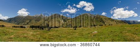 Meadow Landscape Panorama - Rob Roy Track, New Zealand