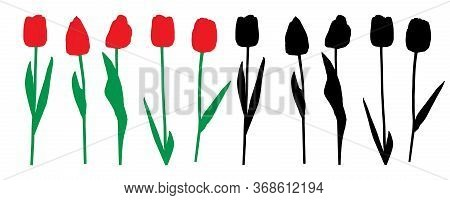 Red Tulips Flowers And Silhouette Of Tulips, Set. Vector Illustration.