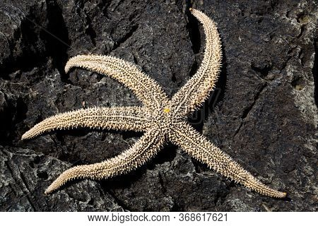 Living sea starfish on arock
